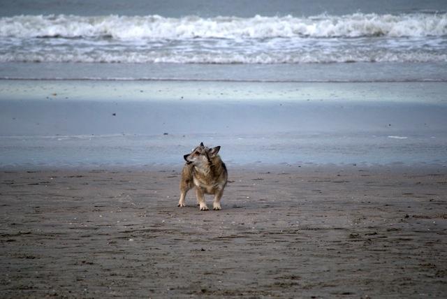 Rebel op het strand