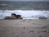 Vastgotaspets Maasvlakte 9