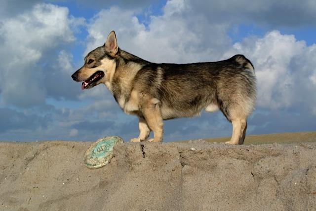 Vastgotaspets-Maasvlakte2 8