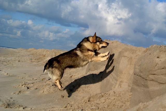 Vastgotaspets-Maasvlakte2 14