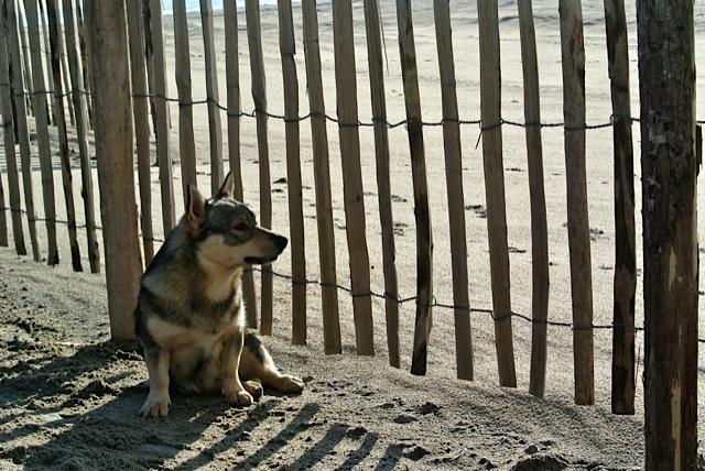 Vastgotaspets-Maasvlakte2 20