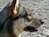 Vastgotaspets-Maasvlakte23