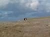 Vastgotaspets-Maasvlakte2 7