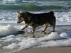 Vastgotaspets-Maasvlakte2 12