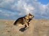 Vastgotaspets-Maasvlakte2 15