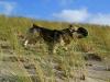 Vastgotaspets-Maasvlakte2 24